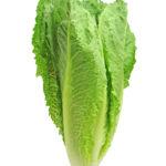 Lettuce – Iceberg
